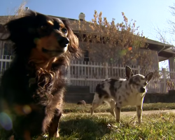 Dog Saves His Best Friend From a Mountain Lion Attack