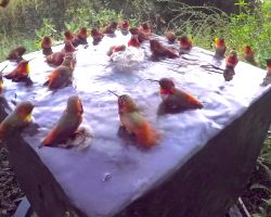 This Is What A Hummingbird Pool Party Looks Like