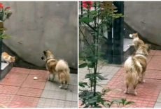 Kind Dog Gives Meat Bun To Homeless Cat, Waits And Watches It Take The Bun Away