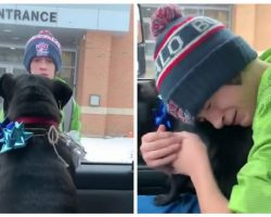Boy Has Tearful Surprise Reunion with Missing Dog After School