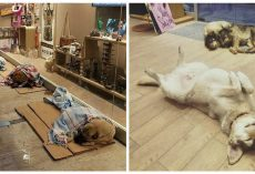 Shopping Mall Stores in Istanbul Let Stray Dogs Inside To Sleep During Harsh Winter Weather