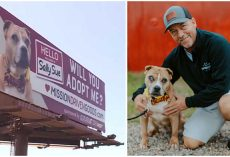 Man Buys Billboard Ads to Help Find Forever Homes for Shelter Dogs in Need