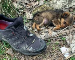 Man Finds Puppy Using A Shoe As A Shelter – Gives Her A Home & A Whole New Life