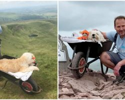 Man Takes His Dying Dog On One Unforgettable Final Hike By Pushing Him In Wheelbarrow