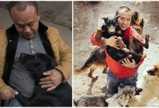 Chinese Millionaire Spends All His Fortune Saving Thousands Of Stray Dogs From The Slaughterhouse