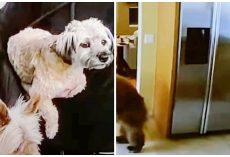 Napping Woman's Pint-Sized Terriers Chase Life-Threatening Intruder From Home