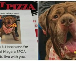 Pizza Joint Puts Pics of Local Shelter Dogs on their Boxes to Help Find Them Forever Homes