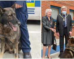 Police Dog Returns to Duty After Being Stabbed 5 Times in the HEAD – Gets a Hero's Welcome