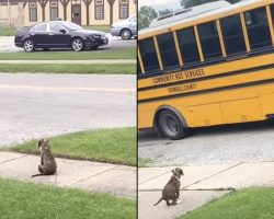 Puppy Waits Patiently For School Bus To Greet Her Little Human