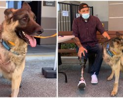 Three-Legged Rescue Dog Gets Adopted By Veteran Who Also Lost A Leg