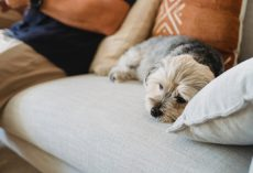 5 Warning Signs Your Dog May Be Sick