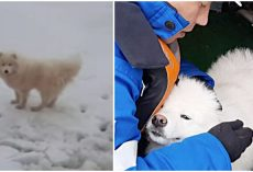 Russian Sailors Rescue Lost Dog Stranded on Arctic Iceberg