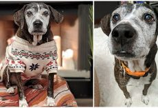 Old Shelter Dog Who Had Painful Skin Condition Now Gets Spa Days in New Home