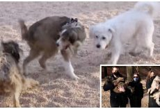 Long Lost Trio Of Dogs Separated At Shelter Run Into Each Other In Another State