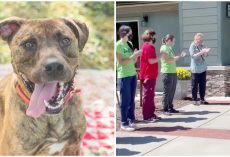 Shelter Workers Give Their Longest-Residing Dog a Standing Ovation After He Finally Finds a Forever Home