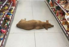 Store in Mexico Let Stray Dog Inside to Cool Off on Hot Summer Day
