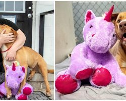 Stray Dog Kept Sneaking Into Store To Steal Unicorn Toy, Cop Buys It For Him