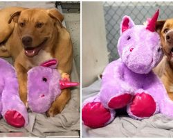 Stray Dog Kept Sneaking Into Store Again & Again Always Stealing The Same Stuffed Unicorn, So Officer Buys It For Him