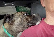 Dog Lays Head On Lady's Shoulder & Thanks Her Rescuer For Saving Her Life