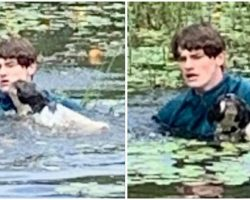 Teen Tourist Jumps into Lake to Save Stranger's Dog from Drowning