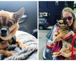 Woman Who Had Her Dog Stolen Steals Her Dog Right Back Days Later