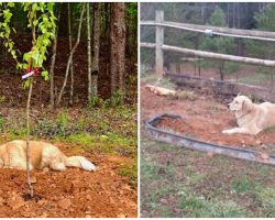 Three-Legged Rescue Dog Visits Late Friends' Graves Every Single Day