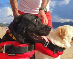 Lifeguard Dogs Rescue 14 Beachgoers from Drowning, Including Children