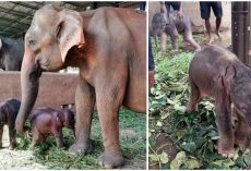 Incredibly Rare Twin Baby Elephants Born in Sri Lanka for the First Time in 80 Years