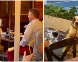Woman Spots A Man Out On The Sweetest Date Ever With His Dog