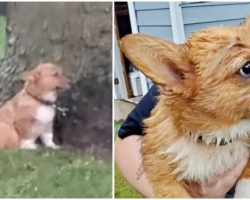 Woman Discovers & Saves Two 'Scared, Soaked' Dogs Chained Up In Yard In Lightning Storm