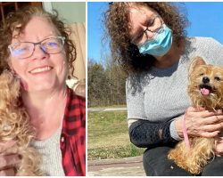 Yorkie Finds His Way Back Home 13 Years After He Was Stolen From Family's Yard