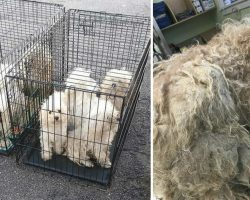 9 Puppies in Horrifying Condition Found Dumped in Parking Lot of Animal Rescue Center