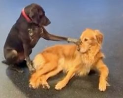 Dog Walks Over To Other Dogs In Daycare And Starts Petting Them Out Of The Blue