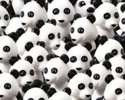 Find The Dog Hiding Amongst All Of The Pandas