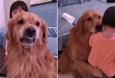 Loyal Dog Protects Crying Girl As She Is Being Told Off By Her Mother