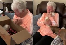 Grandma Bursts into Tears of Joy After Being Surprised with a New Puppy