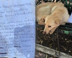 Lonesome Puppy Found Tied To A Park Bench with a Heartbreaking Note Next To Him