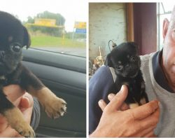 Five-Week-Old Pug Puppy Abandoned in Plastic Bag Ends Up Being Adopted By His Rescuer