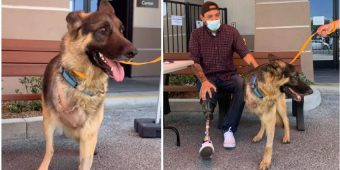 Rescue Dog With Amputated Leg Adopted By A Veteran Who Lost A Leg While On Duty