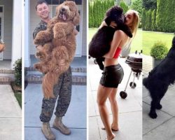 10+ Sweet Before And After Pics Of Dogs Who've Grown Up